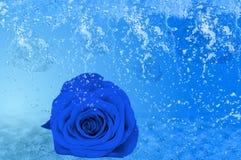 美丽的蓝色玫瑰、很多冰和水 免版税库存图片