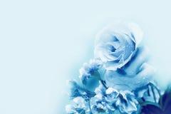 美丽的蓝色玫瑰在不可思议的轻的春天 库存图片