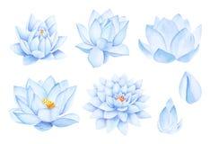 美丽的蓝色荷花花 额嘴装饰飞行例证图象其纸部分燕子水彩 纯净的水开花 向量例证