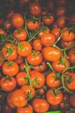 美丽的蕃茄 免版税库存照片