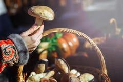 美丽的蘑菇牛肝菌蕈类在有修指甲的女孩的手上在钉子 免版税库存照片