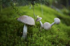 美丽的蘑菇 免版税库存图片