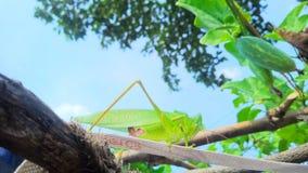 美丽的蚂蚱…他在花享用 库存照片