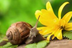 美丽的蜗牛 库存照片