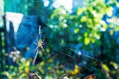 美丽的蜘蛛把网编成辫子 库存照片