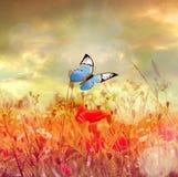 美丽的蝴蝶和好的花 夏天横向 图库摄影
