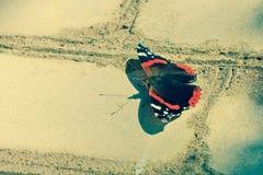 美丽的蝴蝶坐砖墙脆弱轻微 库存照片