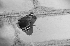 美丽的蝴蝶坐砖墙脆弱轻微 库存图片