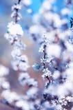 美丽的蝴蝶掠过在与开花的灌木的白色芽的分支在5月温暖的晴朗的庭院里 库存图片
