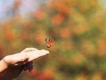 美丽的蝴蝶飞行入天空遇见阳光与 库存图片