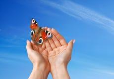 美丽的蝴蝶 免版税库存照片