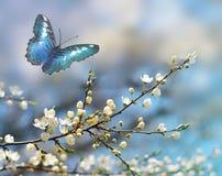 美丽的蝶粉花 库存照片
