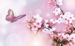 美丽的蝶粉花 免版税图库摄影