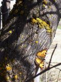 美丽的被伪装的蝴蝶 免版税图库摄影