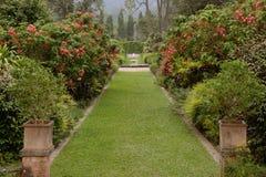 美丽的被修剪的草坪在夏天庭院里 免版税库存照片