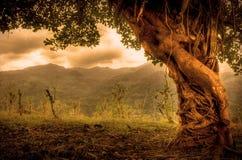 美丽的被卷入的结构树 免版税库存图片
