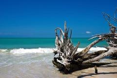 美丽的被风化的漂流木头 免版税图库摄影
