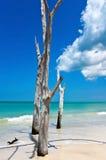 美丽的被风化的漂流木头 免版税库存图片