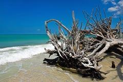 美丽的被风化的漂流木头 库存图片
