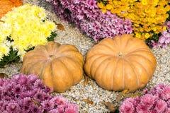 美丽的装饰南瓜 公园和ga的秋天装饰 库存图片