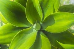 美丽的装饰绿色棕榈叶关闭  免版税库存图片