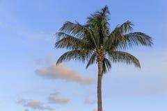 美丽的计算机前景生成了图象掌上型计算机照片可实现的日落结构树结构树 免版税库存照片