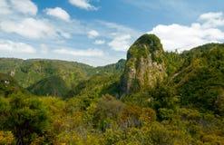 美丽的谷的风景图象在Coromandel,新西兰 免版税库存照片