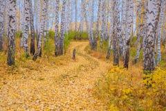 美丽的路在秋天森林里 库存照片
