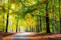 森林公路 免版税库存照片