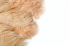 美丽的软的奶油色驼鸟用羽毛装饰背景 免版税库存照片
