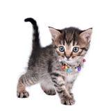 美丽的逗人喜爱的一只月大小猫 免版税库存照片
