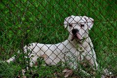 美丽的逗人喜爱的狗在森林里守卫物产 免版税库存图片