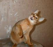 美丽的逗人喜爱的非常招标小猫,我的宠物我真爱她 免版税库存图片