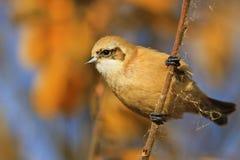 美丽的逗人喜爱的鸟在一晴朗的秋天天 免版税库存照片