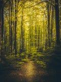 美丽的道路在夏天森林里 免版税库存照片