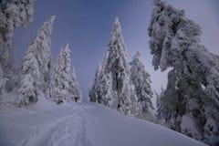 美丽的道路在黑森林里 免版税库存图片