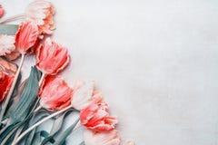 美丽的郁金香边界,春天布局 免版税图库摄影