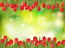 美丽的郁金香 10 eps 图库摄影