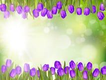 美丽的郁金香 10 eps 免版税库存图片