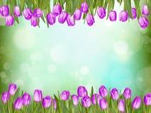 美丽的郁金香 10 eps 库存图片