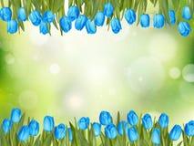美丽的郁金香 10 eps 免版税库存照片