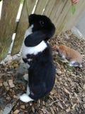美丽的野兔 库存照片