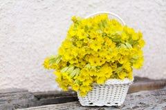 美丽的野生报春花花束在一个白色篮子开花 库存图片