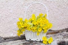 美丽的野生报春花花束在一个白色篮子开花 免版税库存照片