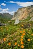 美丽的野生桔子开花有看法对山 免版税库存图片