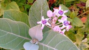 美丽的野花和芽白色珍珠 免版税库存图片