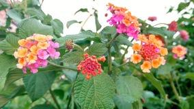 美丽的野花和芽 免版税库存图片