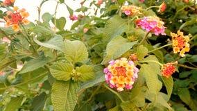 美丽的野花和芽 图库摄影
