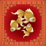 美丽的金鱼被隔绝的小组 免版税库存图片