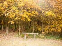 美丽的金黄桔子在空的长凳和平孑然上离开 免版税库存照片